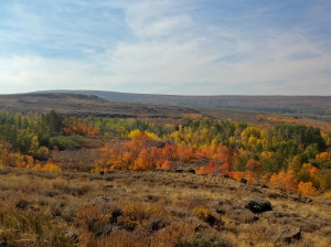 View of aspens along Steens Mountain Loop