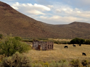 Cattle grazing near an abandoned stone building on the Whitehorse Ranch Road
