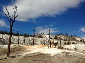 The barren landscape on the Lower Terrace Drive in Yellowstone
