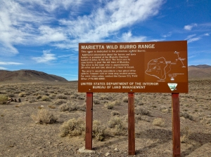Welcome to the Murietta Wild Burro Range. We saw a total of 6.